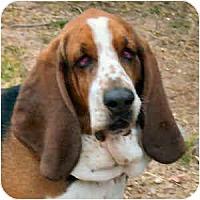 Adopt A Pet :: Louie - Phoenix, AZ