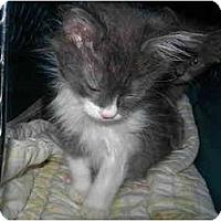 Adopt A Pet :: Andy - Davis, CA