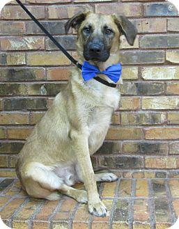 German Shepherd Dog Mix Dog for adoption in Benbrook, Texas - Trey
