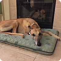 Adopt A Pet :: Guy - Carlsbad, CA