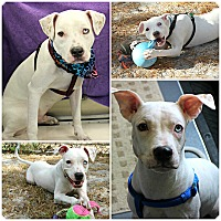 Adopt A Pet :: Benson - Forked River, NJ