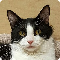 Adopt A Pet :: Shanda - Winchester, CA