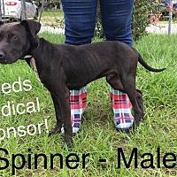 Adopt A Pet :: Spinner - Waycross, GA