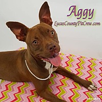 American Pit Bull Terrier/Boxer Mix Dog for adoption in Toledo, Ohio - Aggy