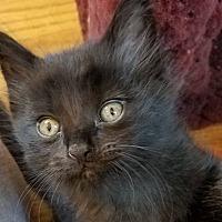 Adopt A Pet :: Handsome Warren - Troy, MI
