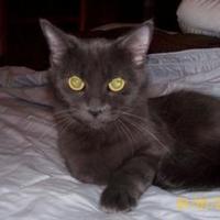 Adopt A Pet :: Hannah - Garland, TX