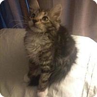 Adopt A Pet :: Holland - Parlier, CA