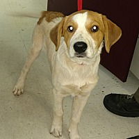 Labrador Retriever Mix Puppy for adoption in Franklin, Georgia - 35317