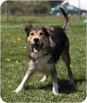 Collie Mix Dog for adoption in Port Hope, Ontario - MoHawk