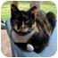 Photo 1 - Calico Cat for adoption in McDonough, Georgia - Barbara