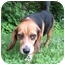 Photo 3 - Beagle Dog for adoption in Blairstown, New Jersey - Lizzie