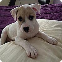 Adopt A Pet :: Jeff - Marlton, NJ