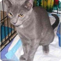 Adopt A Pet :: Christmas - Davis, CA