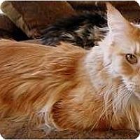 Adopt A Pet :: Sampson - Alexandria, VA