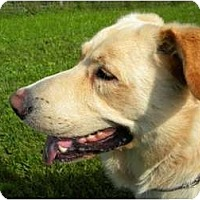Adopt A Pet :: Rookie - Rigaud, QC