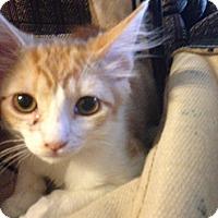 Adopt A Pet :: Sally - Lakewood, CA