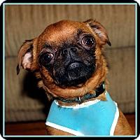 Adopt A Pet :: ROSY-POSY ADOPTION PENDING - Jackson, MS