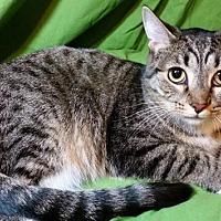 Adopt A Pet :: Sweetie - Sarasota, FL