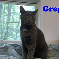 Adopt A Pet :: Greg - East Stroudsburg, PA