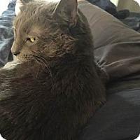 Adopt A Pet :: ANYA (COURTESY POST) - Phoenix, AZ