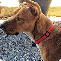 Adopt A Pet :: Axel - Pleasanton, CA