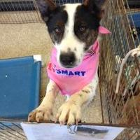 Adopt A Pet :: Drambuie - Hopkins, SC