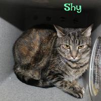 Adopt A Pet :: Shy - Melbourne, KY