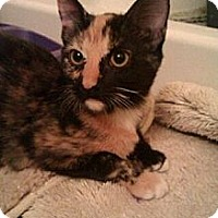 Adopt A Pet :: Min min and Sis - Chandler, AZ