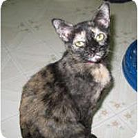 Adopt A Pet :: Dottie - Shelton, WA