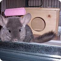 Adopt A Pet :: Rosa - Avondale, LA