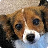 Adopt A Pet :: The Cuteness - Oakley, CA