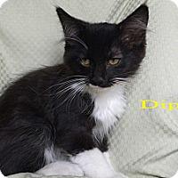 Adopt A Pet :: Dippy - Modesto, CA
