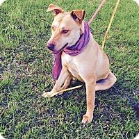 Adopt A Pet :: Gwen - Lewisville, IN