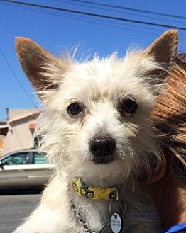 Terrier (Unknown Type, Medium) Mix Dog for adoption in Midway City, California - Lefty