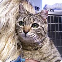 Adopt A Pet :: Adaline - Toledo, OH