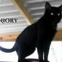 Adopt A Pet :: Niory - Franklin, TN