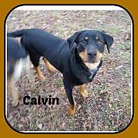 Adopt A Pet :: CALVIN - Malvern, AR
