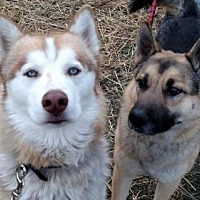 Adopt A Pet :: Rolo (and Sabre) - Harvard, IL