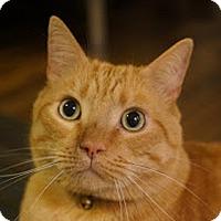 Adopt A Pet :: Zorro - Durham, NC