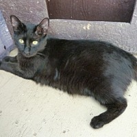 Adopt A Pet :: Coal - Calimesa, CA