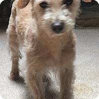 Adopt A Pet :: Miriam - Thousand Oaks, CA