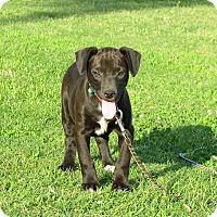 Adopt A Pet :: FRISCO - Bedminster, NJ