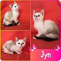 Adopt A Pet :: Jyn - Jeffersonville, IN
