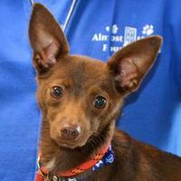 Adopt A Pet :: Piney - Elk Grove Village, IL