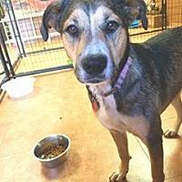Adopt A Pet :: Keeko - Broken Arrow, OK