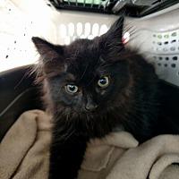 Adopt A Pet :: Catherine - Toms River, NJ