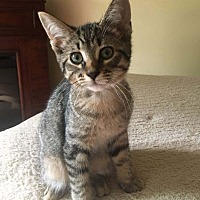 Adopt A Pet :: Colleen -Sweetie! - Huntsville, ON