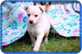 Terrier (Unknown Type, Medium) Mix Puppy for adoption in Fredericksburg, Virginia - Nitro
