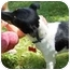 Photo 3 - Rat Terrier Dog for adoption in Osseo, Minnesota - Lola