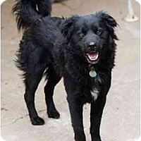 Adopt A Pet :: Shaw - Portland, OR